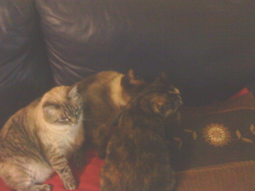 Photos de mon chien et de mes 3 chats