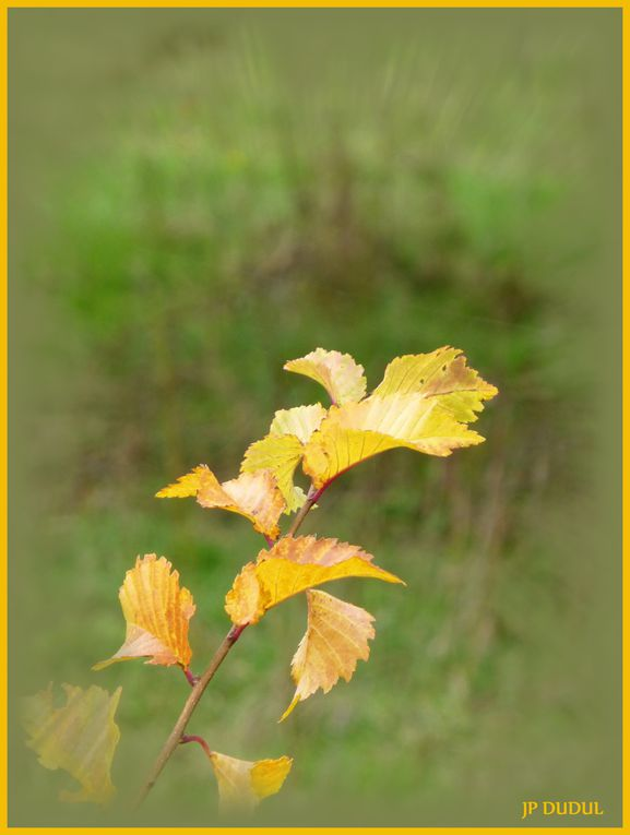 Album - Fleurs--plantes-.