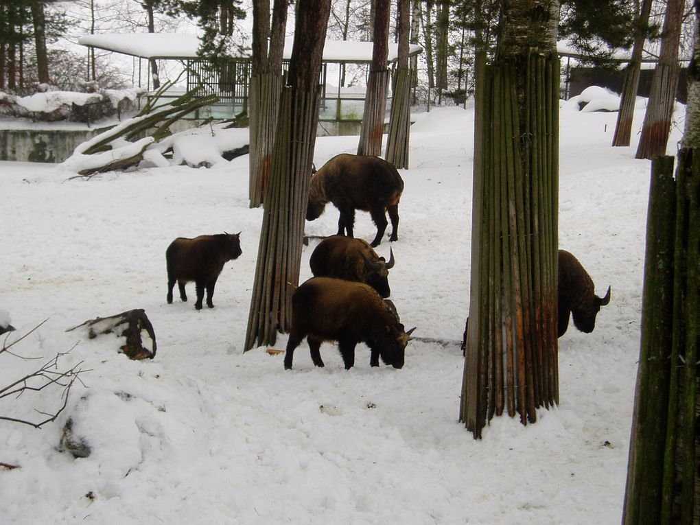 Petit aperçu des animaux qu'on peut voir dans ce zoo.