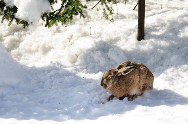 Photographies prises aux Franches-Montagnes en 2011 - 2012 par divers membres de l'Association Le Pèlerin