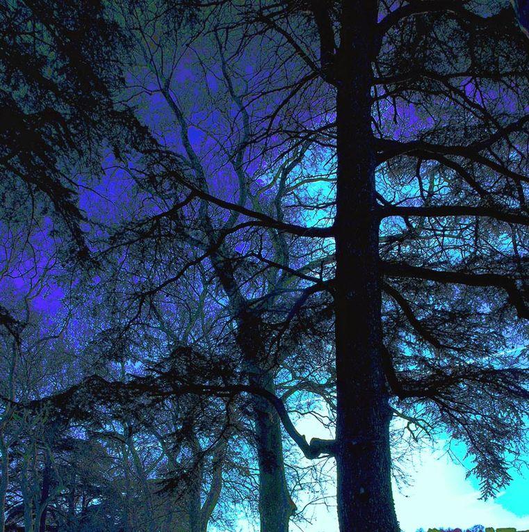 Album - Les-arbres