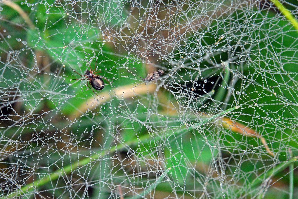 Album - Arachnides