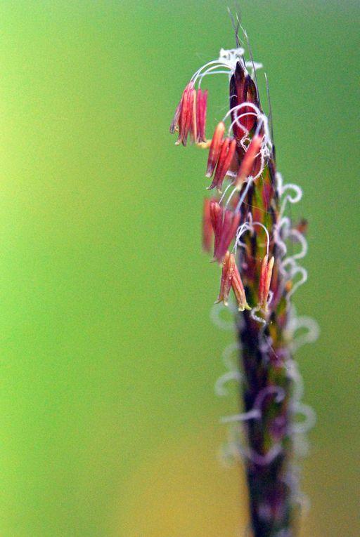 plantes sauvages et paysages paysans