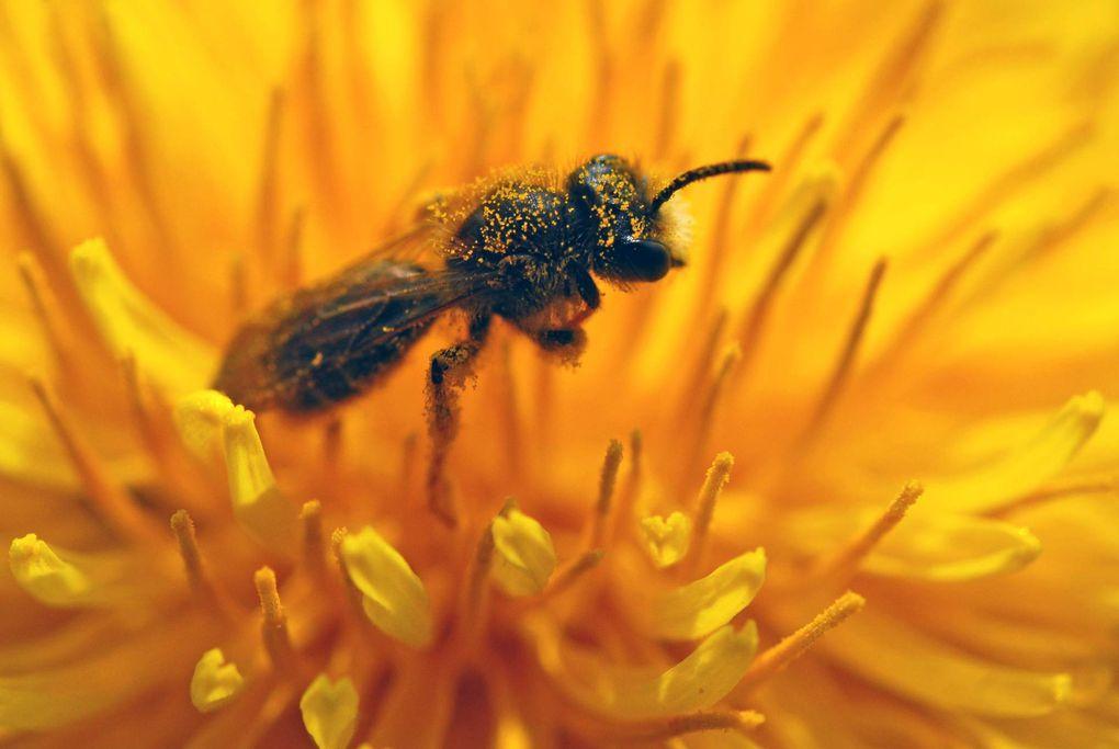 Album - Insectes-volant