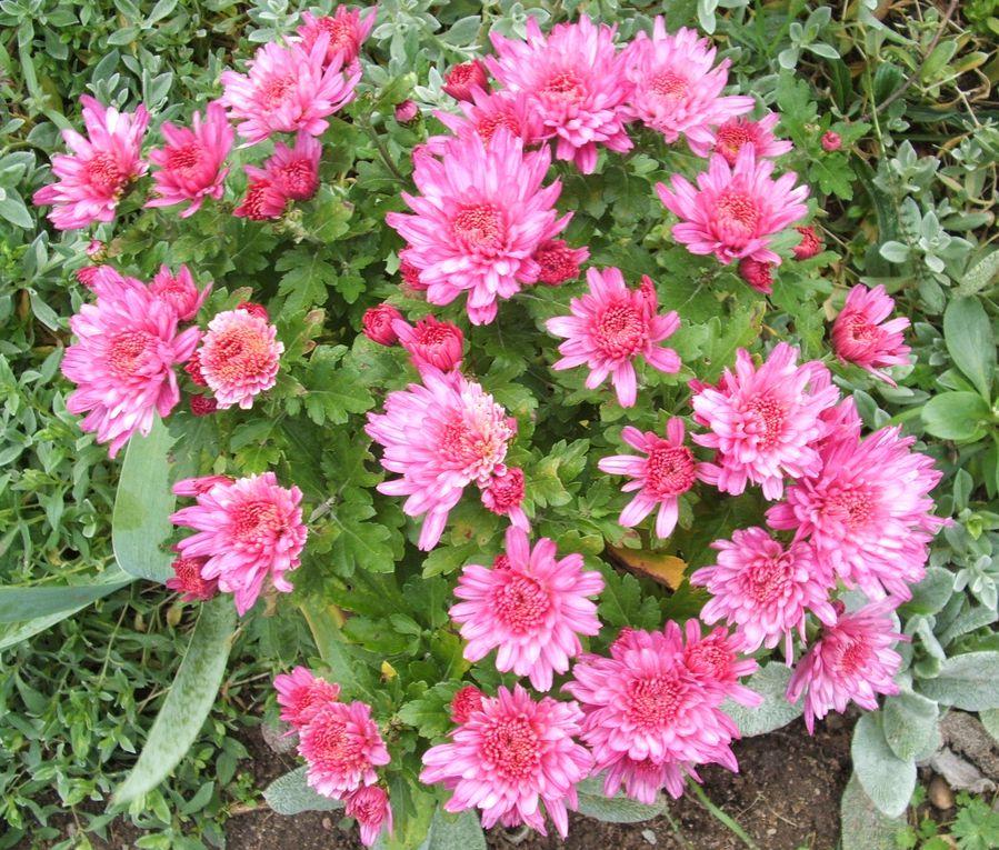 Album - 2011-fleurs d'automne