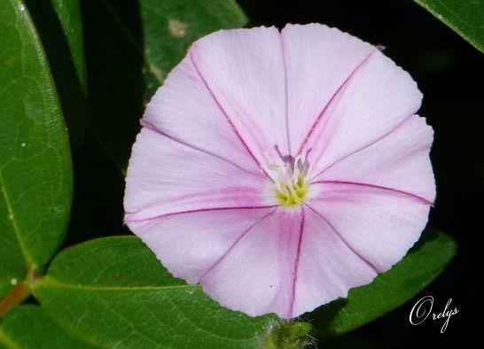 Album - Mandalas-fleurs