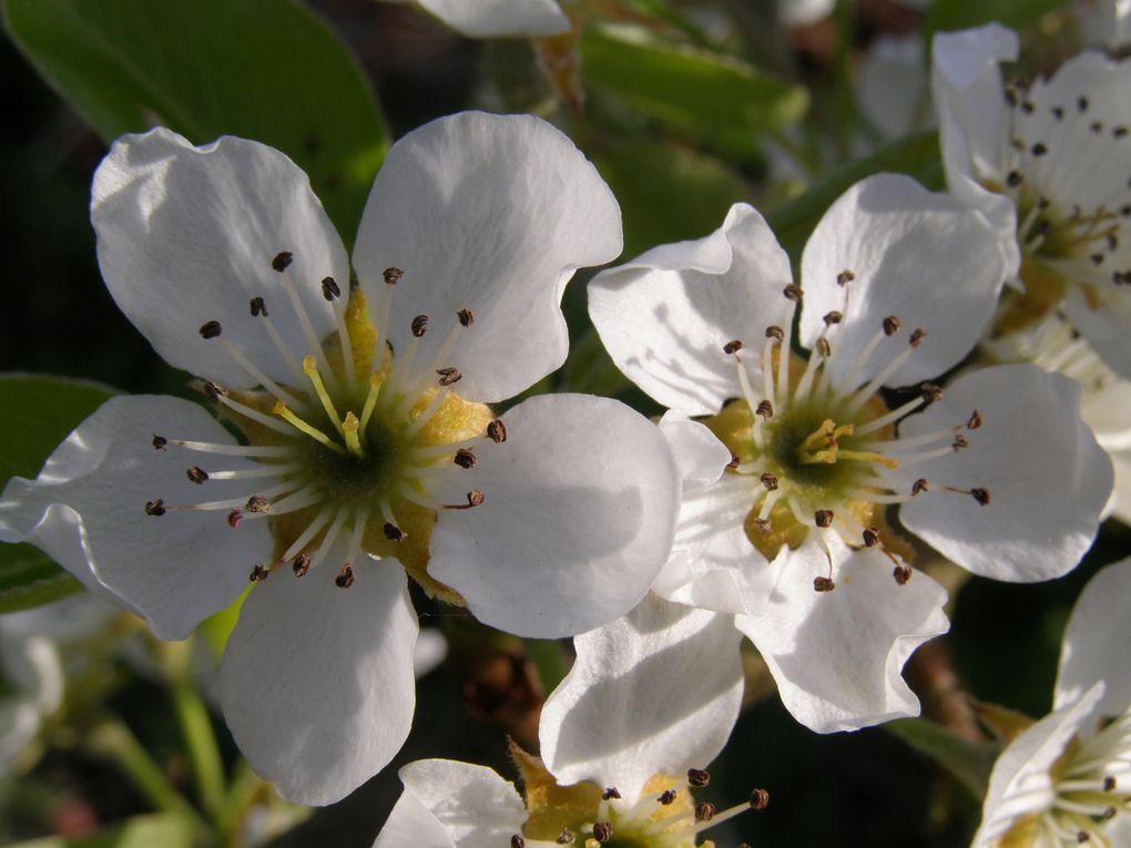 Des fleurs, des insectes, des fruits de mon jardin, dans mes balades