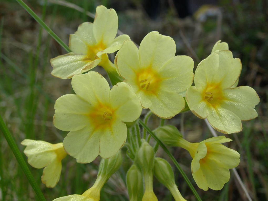 Album - jaunes-fleurs