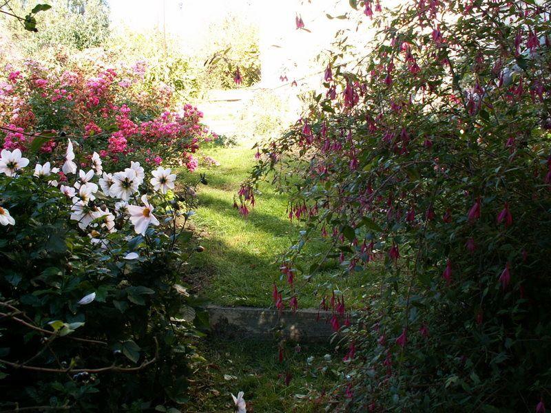 quelques petites scènes surprises au jardin avec l'APN cet automne.