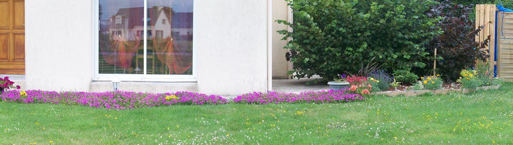 Album - mon-jardin-et-mes-fleures
