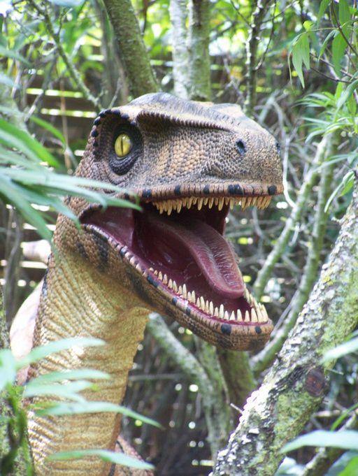 Quelques photos de nos dinosaures