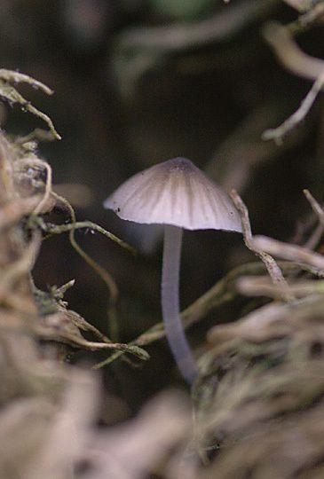 Quelques photos de champignons