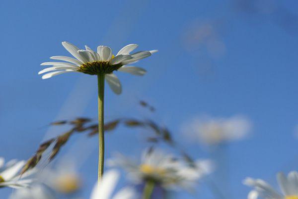Photos de fleurs sauvages ou cultivées