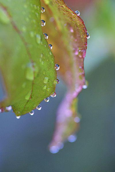 Photos de gouttes, pluie et rosée