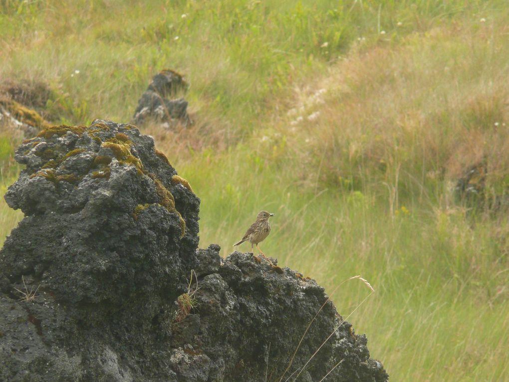 Islande & GroenlandMexiqueBaie de Somme & MarquenterreIci et là....Mouette tridactyle, héron cendré, sterne arctique, merle noir, etc....