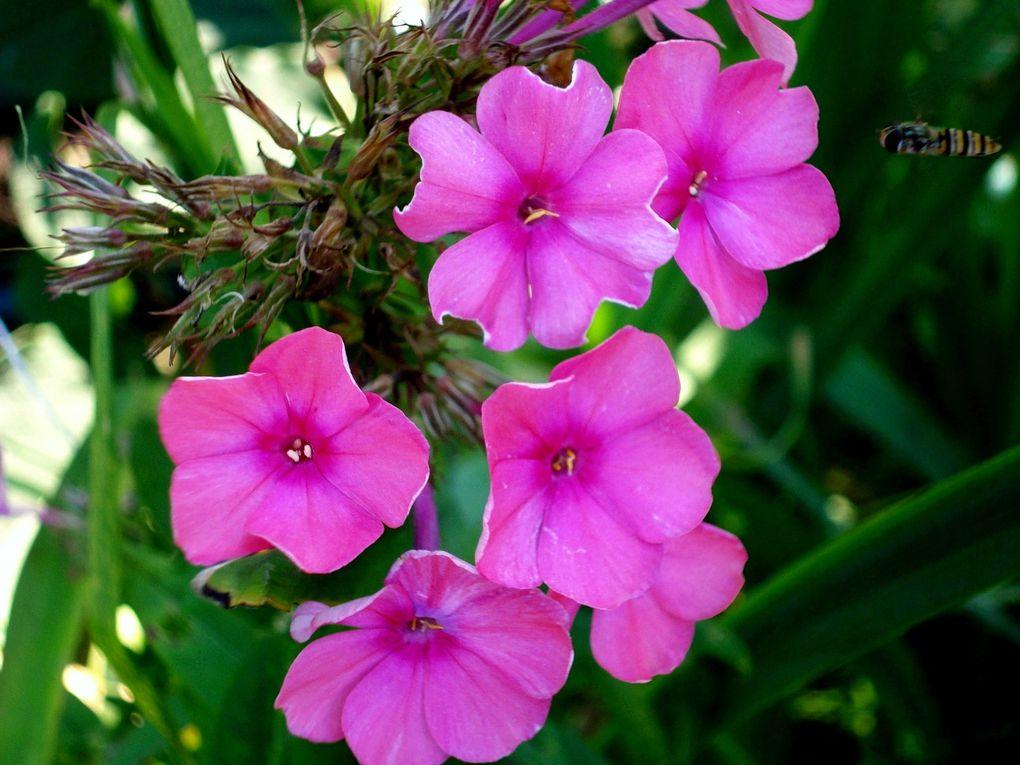 Photos-de-fleurs