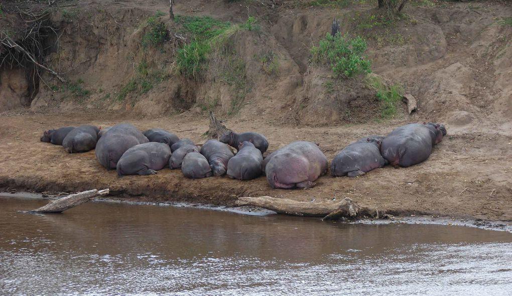 Nous gardons un souvenir inoubliable de notre séjour au Kenya-Tanzanie.
