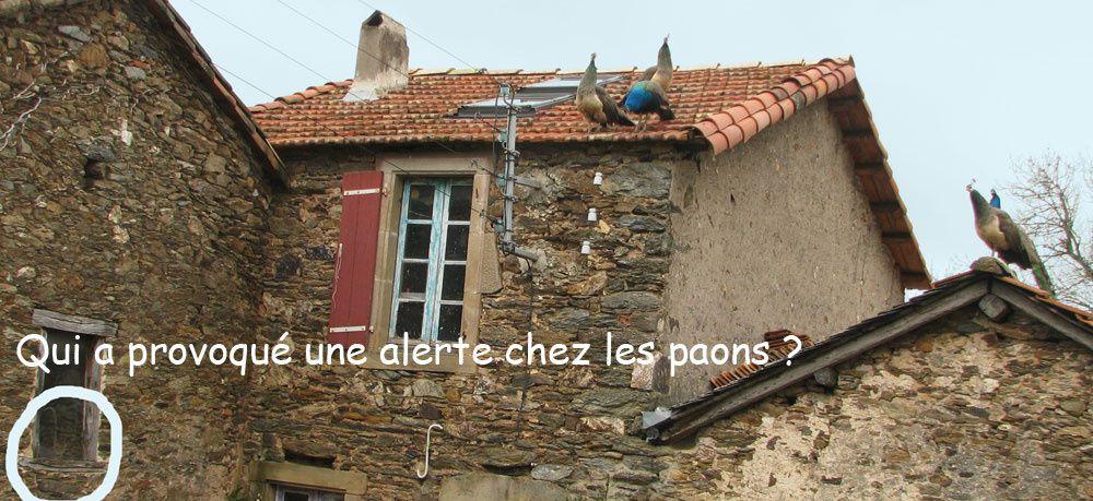notre spot en France... depuis 95 nous plantons, rénovons, innovons... L'écohameau est là pour permettre à ses habitants (humains et animaux) de vivre dans un lieu protégé. Nous y recevons tous ceux qui veulent apprendre à mieux se connaitre.