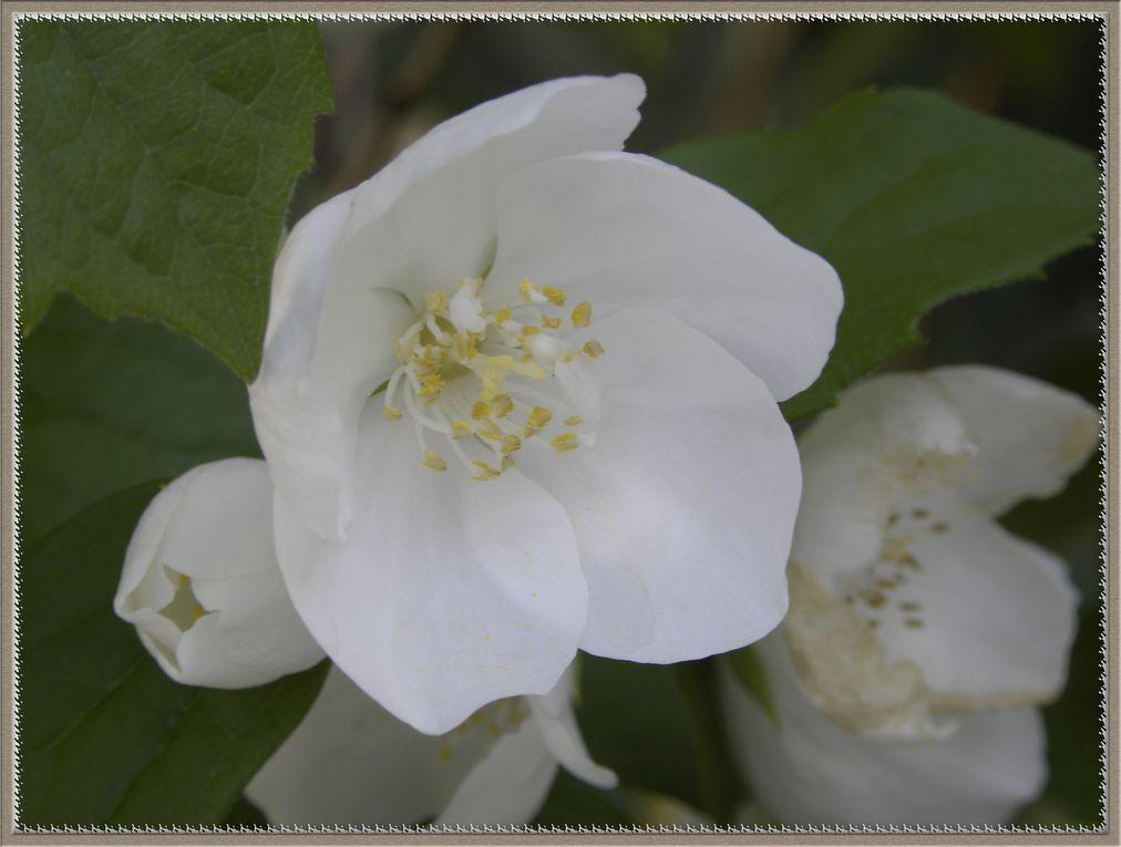 Album - Fleurs1