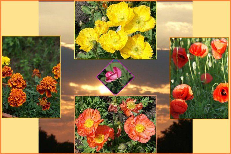 ma nature, ma ville me servent de base pour la création de cartes postales à ma façon