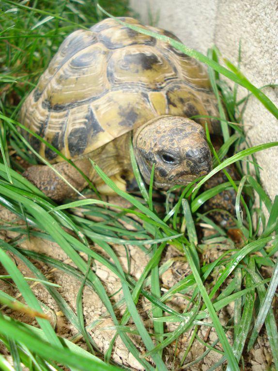 Photos Séjour 1er au 5 août 2011