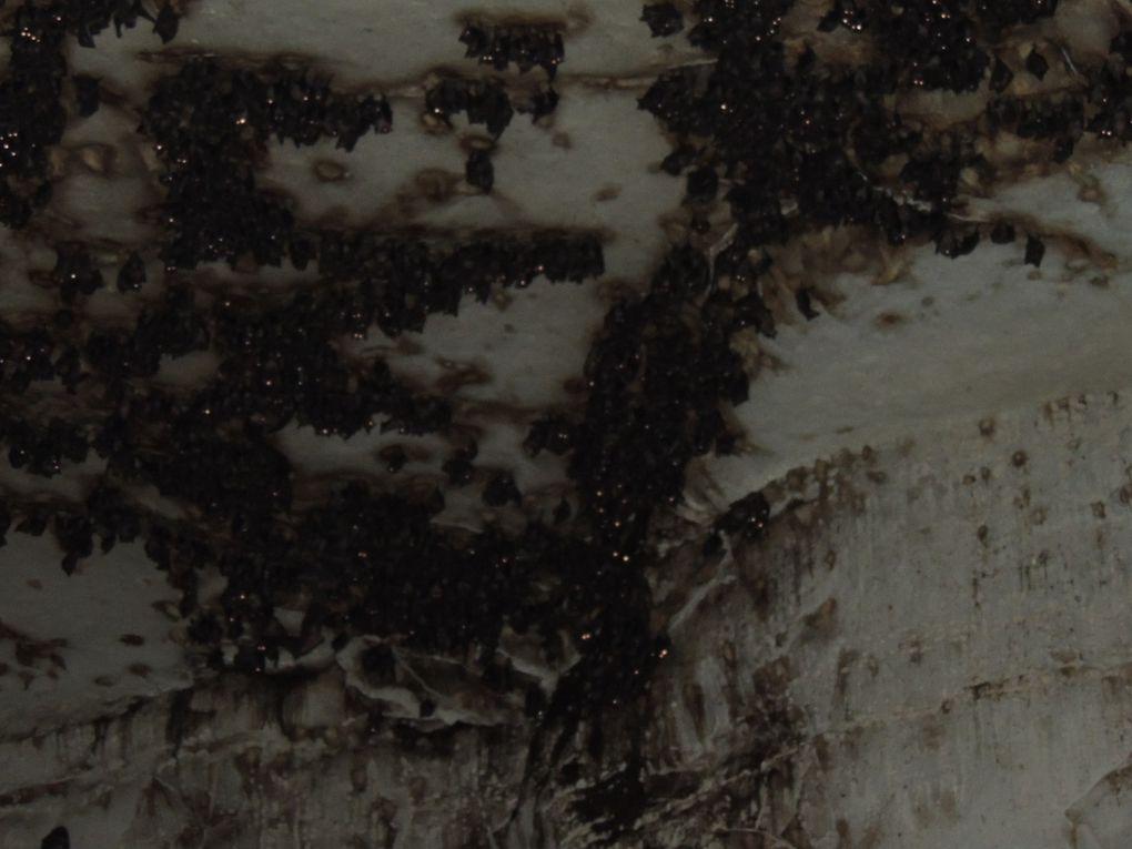 Album - Mada-2013