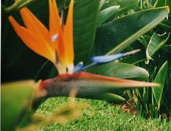 une très belle ile de fleurs