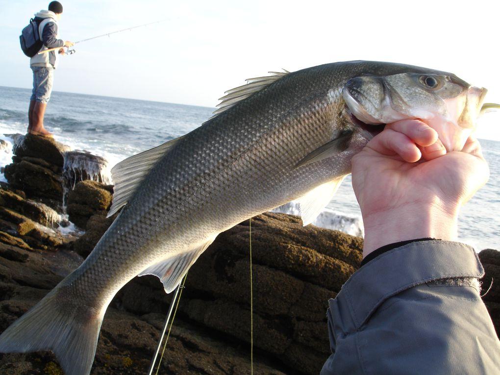 Quelques prises mer, petites et plus grosses...