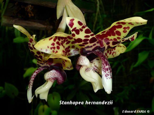Détails des fleurs, photos in-situ et de son habitats