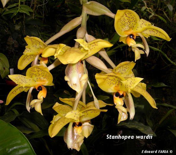De photos de quelques-une des espèces qui ont fleurit en 2010