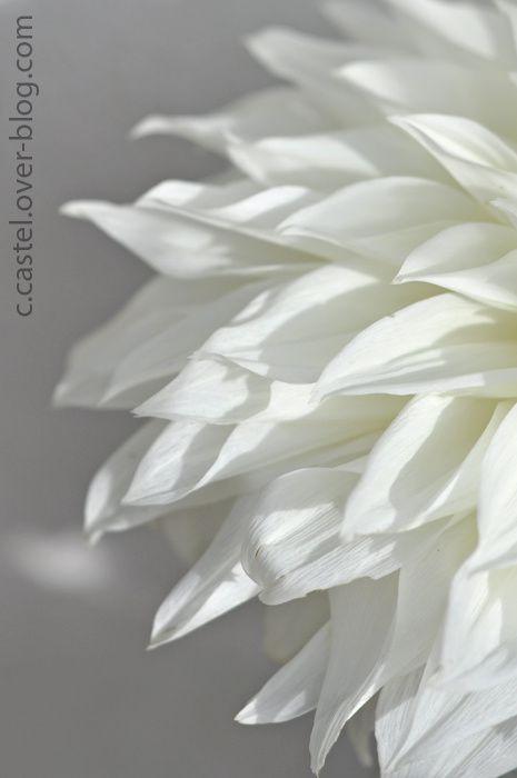 Album - Variations blanches