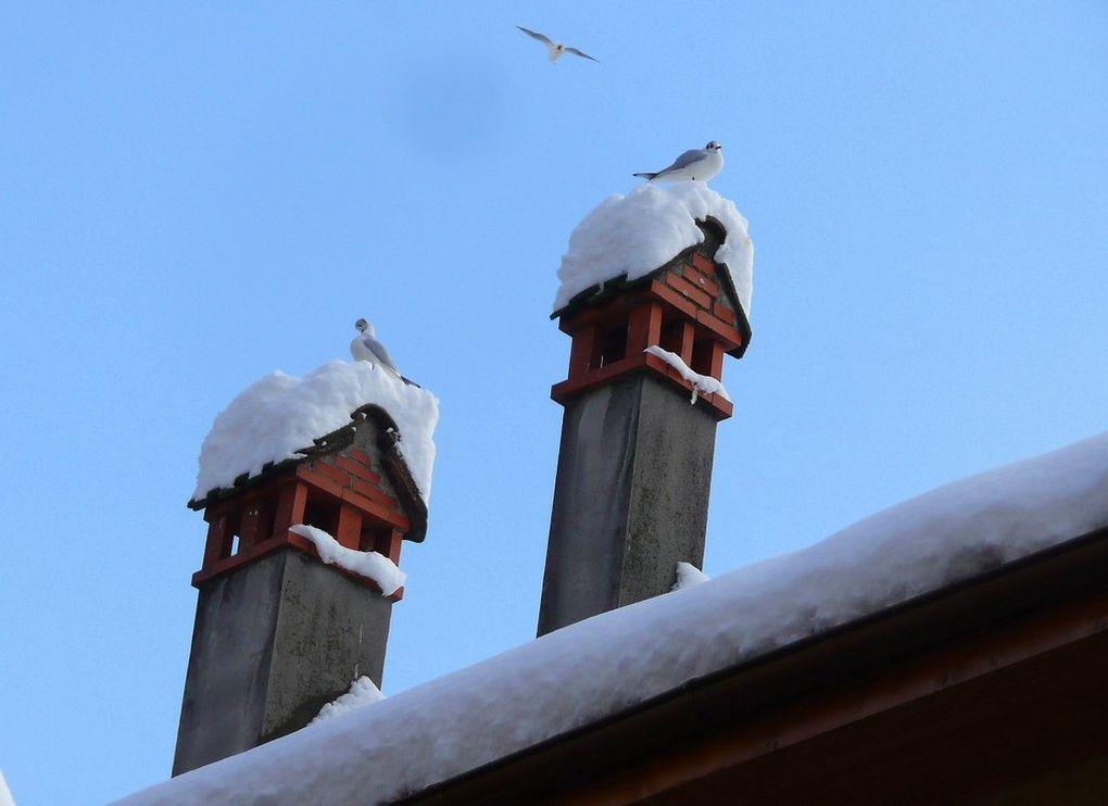 Savoie et Haute Savoie, janvier et  février 2013