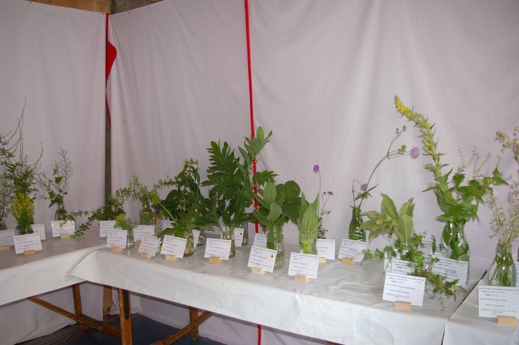 L'exposition de 150 plantes organisées par le groupe nature de Gruffy