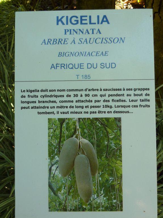 Séjour en Guadeloupe du 06 au 16/12/2009