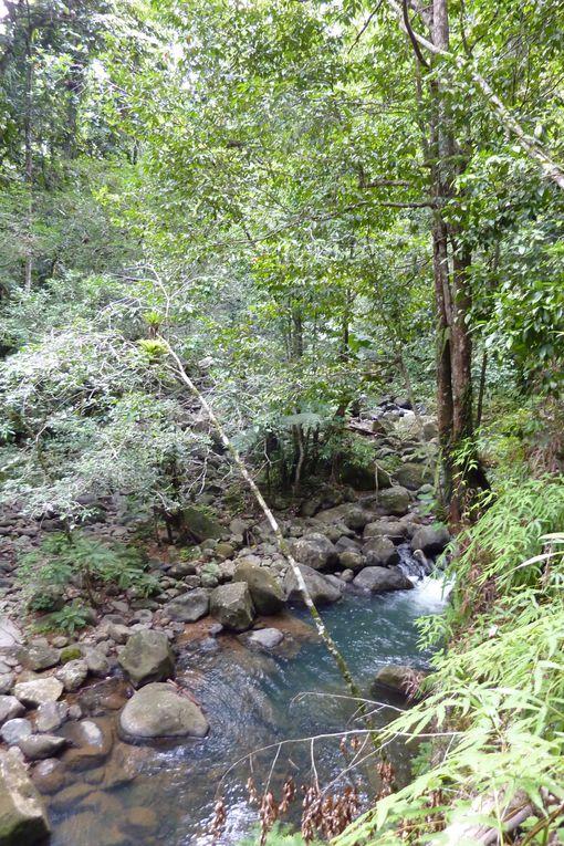 Randonnée dans la forêt tropicale à Sainte-Rose / Sofaïa pour accèder au saut des Trois Cornes.