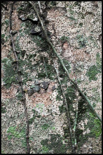 Balade dans la forêt tropicale du parc national de Khitchakut et à Chanthaburi.