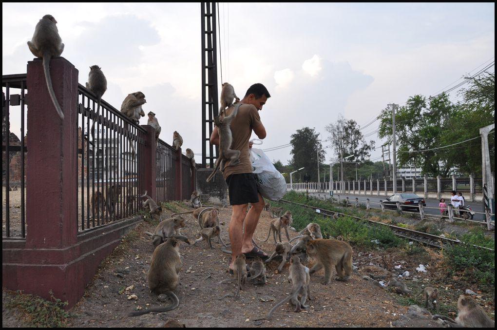 Lopburi, qui fut la deuxième plus grande ville du royaume d'Ayuthaya au milieu du XIVème siècle est aujourd'hui une ville de moyenne importance, paradis des singes...