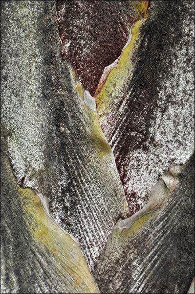 collection d'images naturalistes collectées au cours du voyage Mouhot ...