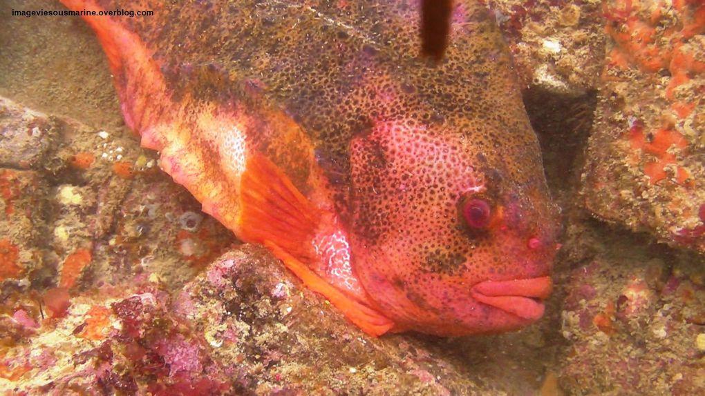 Album - poissons-divers