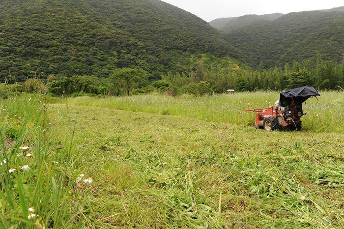 Ile Amami , montagnes , foret , petites baies , elevage de poissons crevettes huitres