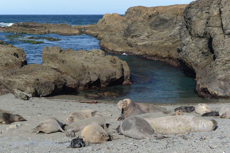 Côte Ouest , d'Ensenada à Cabos , entrée en Mer de Cortes