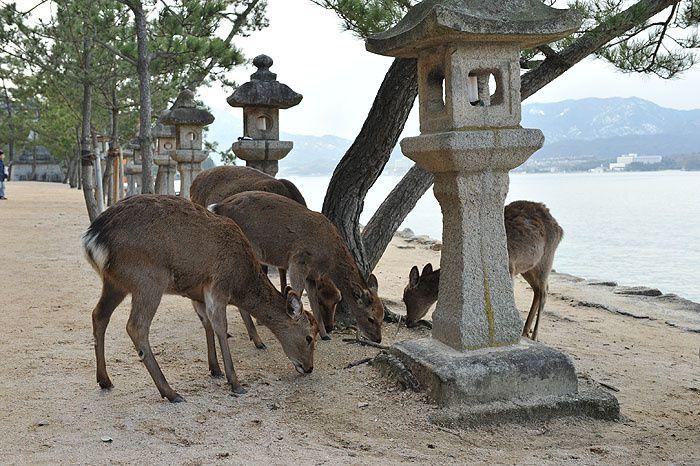SANCTUAIRE D'ITSUKISHIMA