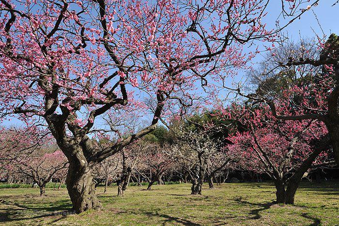 Oshima,Seto Naikai,Onomichi,Jardin Korakoen a Okayama,Tomonoura sous la pluie