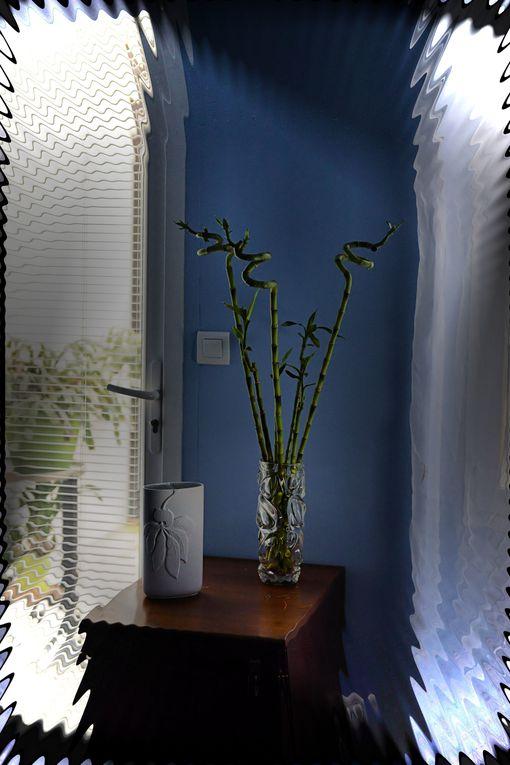 Album - plantes-et-fleurs