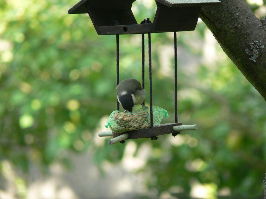 Nos voisins et visiteurs
