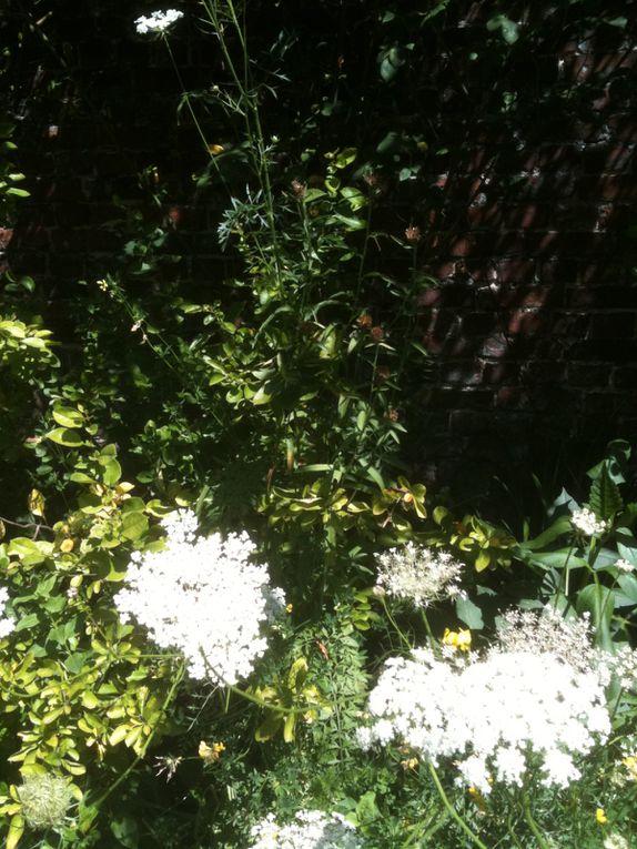Epeule et ses Jardins