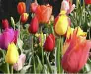 de jolies fleurs