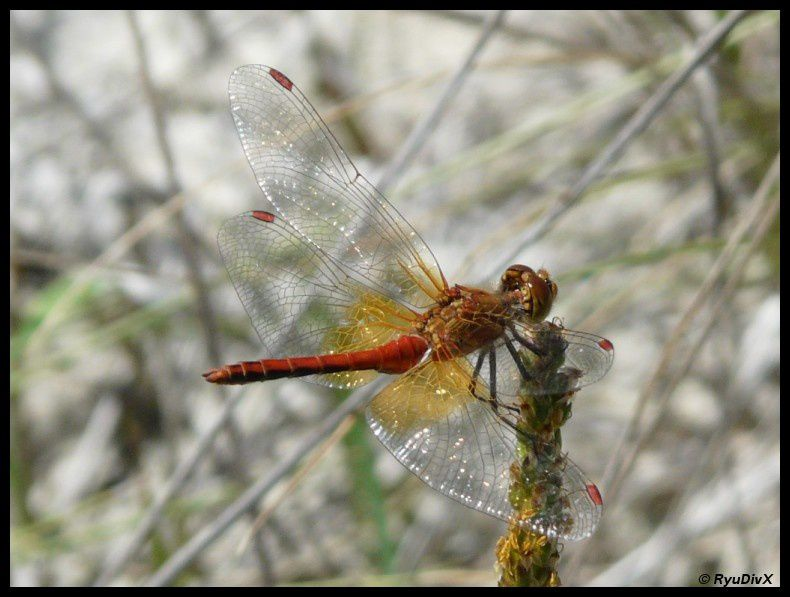 2008-07-29-Beaurieres