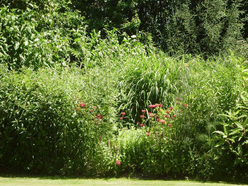 le jardin du petit bordeaux un jardin à Saint Biez en Belin dans la Sarthe pays de la Loire
