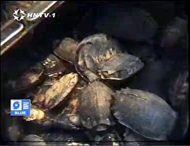 Album - Tuerie animaux sauvages Chine